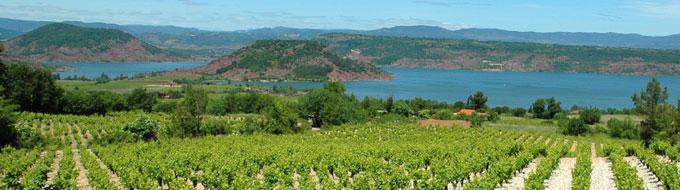 Vignoble du Clermontais - Hérault, le Languedoc © OTI Clermontais