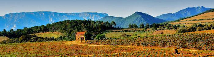 Vignoble du Berlou - Saint-Chinian - Roquebrun - Hérault, le Languedoc © Guy Lebreton